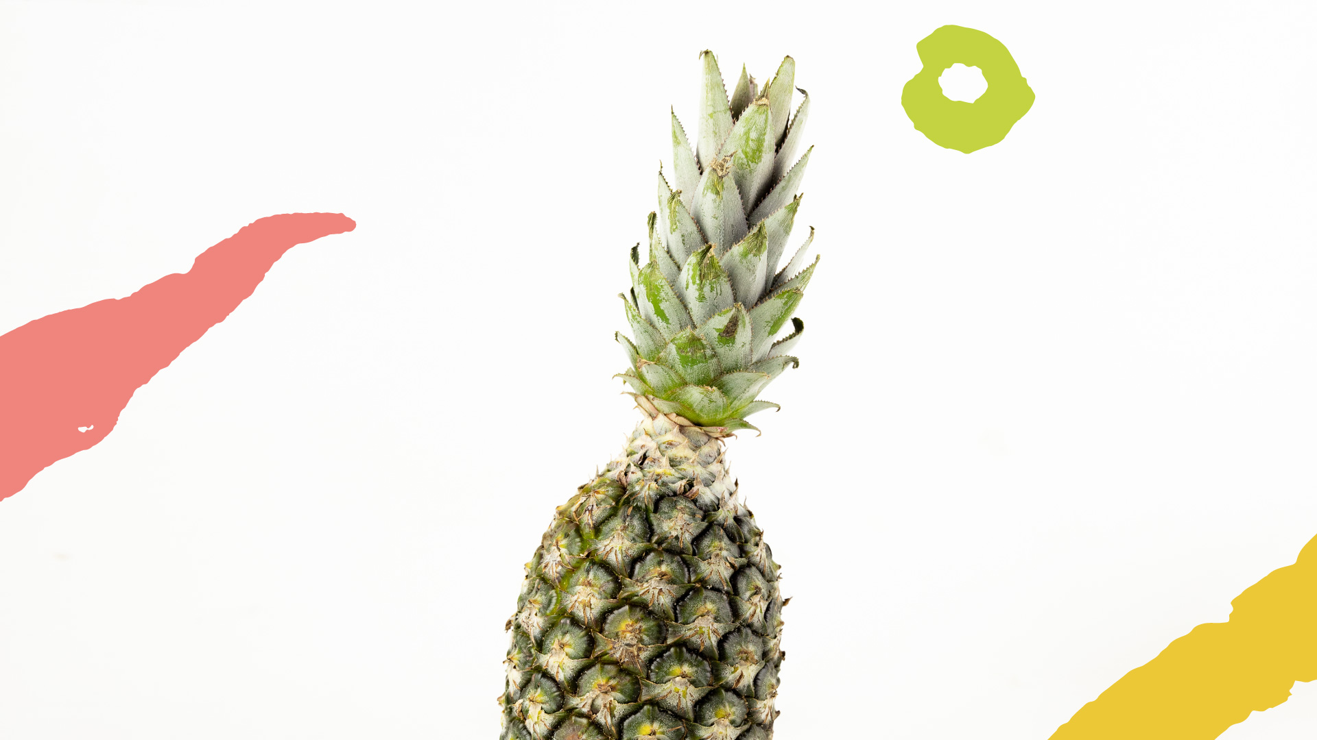 abacaxi-organico-raizs